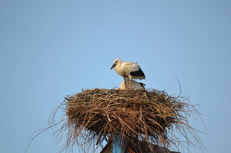 Storch in eisenberg