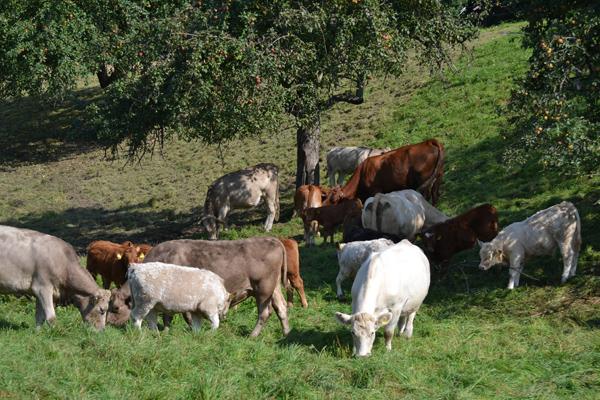 Weidefleisch in Thüringen